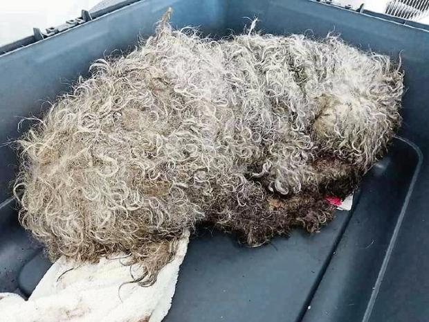 Hope was found in a shocking condition