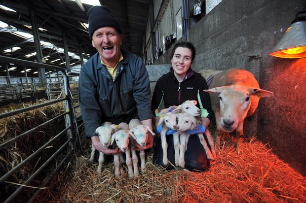 Henry Wals and Nicola Fetherstone, Teagasc with the six lambs and the mother who were born at the Teagasc centre in Athenry. Photo: Ray Ryan