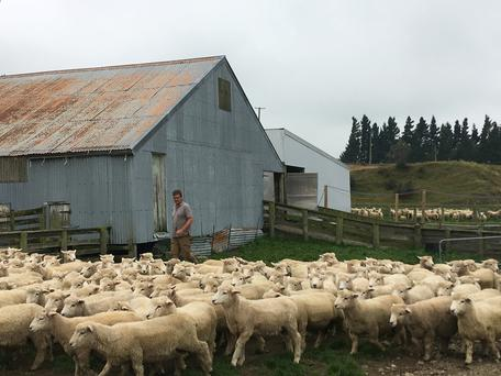 Mike Salvesen works in his yard on his farm at Mt Somers, outside Christchurch, New Zealand March 20, 2019. Picture taken March 20, 2019. To match INSIGHT NEWZEALAND-SHOOTOUT/GUNLAWS REUTERS/Tom Westbrook
