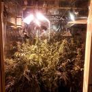 43 plants were discovered Photo: Garda Press Office