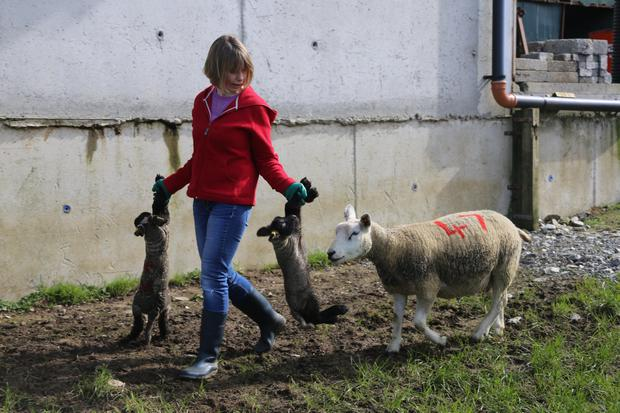Claire Duffy leading a twin ewe to grass on the Duffy farm in Kerrykeel, Co Donegal