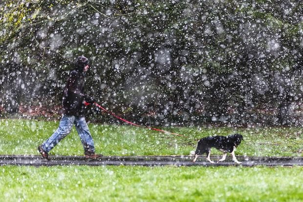 Mixed bag: A man walks a dog during a snow shower in Tuam, Co Galway. Photo: Andy Newman