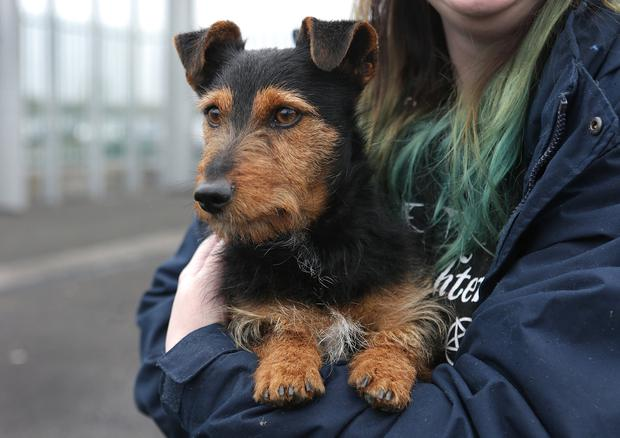 Chasing leads: Sarah Ryan, Iarnród Éireann, with 'Hamish', who was found in Heuston Station. His owners have come forward to claim him