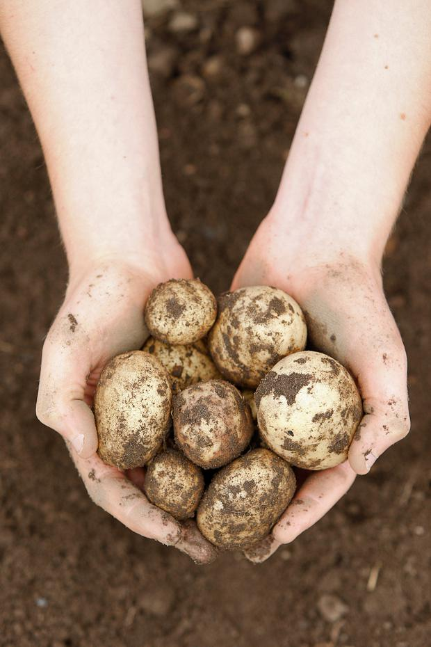 Consumption of potatoes has increased rapidly in the country over the last 20 years, and production has escalated from 20 million tonnes in 2000 to approximately 45 million tonnes per annum in 2018. Stock image