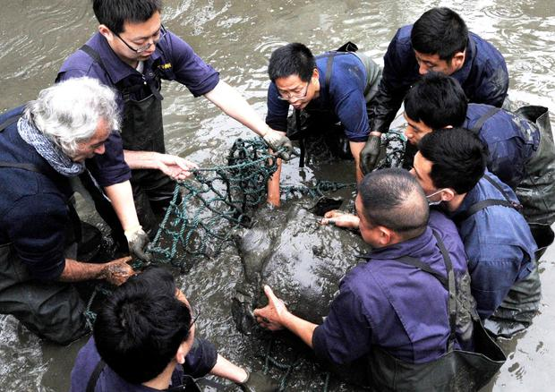 Researchers lift a Yangtze giant softshell turtle out of the water at a zoo in Suzhou in eastern China's Jiangsu province (Chinatopix via AP)