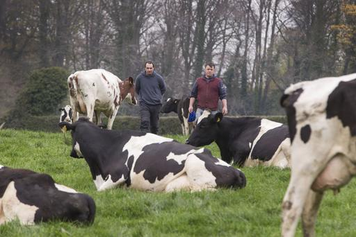 Farm manager Peter Taaffe (right) and Barry Clarke with some of their herd at Knockmaroon Farm, beside the Phoenix Park. Photo: Colin O'Riordan