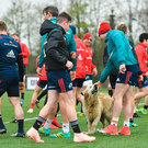 Top Dogs or Underdogs: A dog gets in among Munster training this week at UL ahead of tomorrow's game against Saracens. Photo: Sportsfile