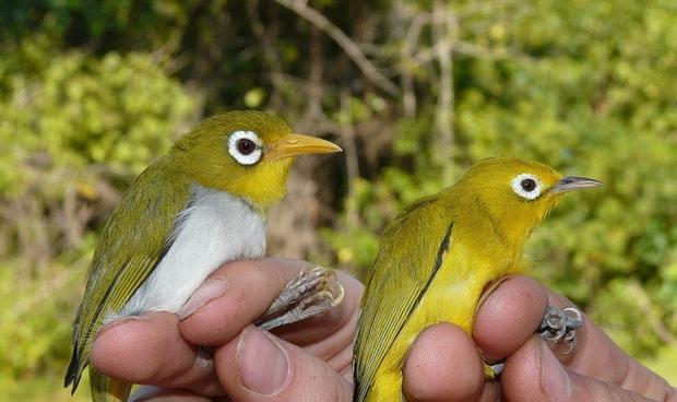 Trinity College researchers have discovered two previously unknown bird species that may shed light on the evolutionary process.