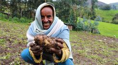 Growth industry: Concern-supported Ethiopian farmer Ahimed Ali Mahamed, showing off his crop. Photo: Jennifer Nolan / Concern Worldwide