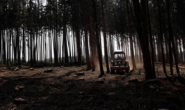 A tractor transports logs out of a forest, which was affected by bark beetle attacks, near the village of Markvartice, Czech Republic, April 5, 2019. Picture taken April 5, 2019. REUTERS/David W Cerny