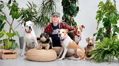 Yappy days: Gráinne Walsh with Rudy, a white boxer (10); Muggins, a Yorkshire cross (10); Birdie, a four-year-old pitbull; Buzz, an Amstaff (5); and Millie, an 11-year-old Weimaraner, at the Grey Area Studio in Chapelizod, Dublin. PHOTO: FRANK McGRATH