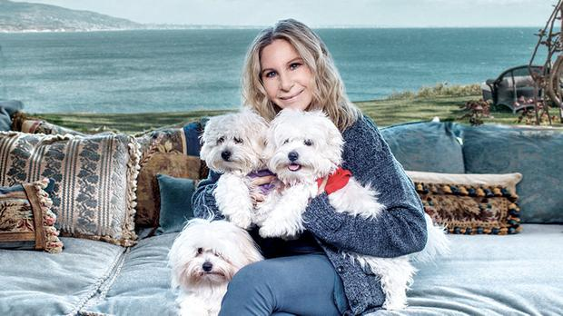 FUNNY GIRL: Barbra Streisand and her three cloned dogs. It cost €45,000 to clone each one