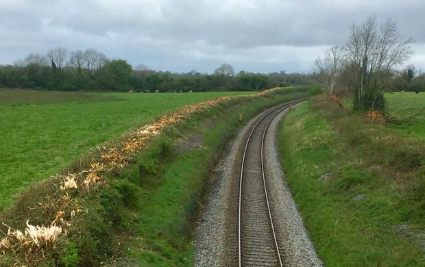 A photo of the hedgerow post-cutting (Photo: Pippa Hackett)