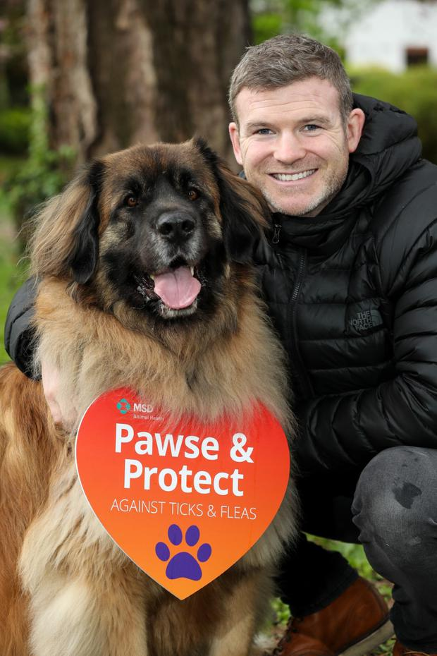 Rugby legend Gordon D'Arcy has come on board MSD Animal Health's Parasite Awareness Campaign as an ambassador, calling on dog owners to 'Pawse and Protect' their dogs and their families from common parasites like ticks and fleas.