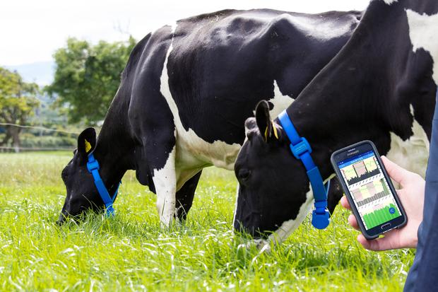 The MooMonitor+ technology is extremely labour-saving, enhancing both the animals and the farmers quality of life.