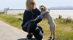 Breeda Heaney from Santry with Bear, a poochon dog, enjoying the good weather at Dollymount Beach, Dublin. Photo: Gareth Chaney Collins