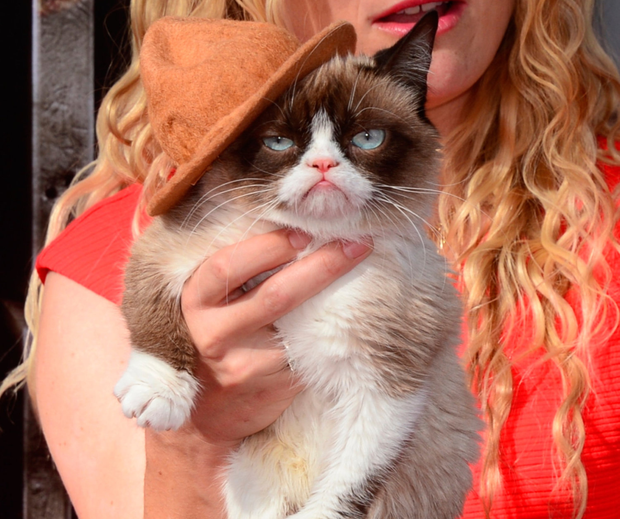 Famous grimace: Grumpy Cat gained international acclaim for her permanent scowl before her death this week. Photo: AFP/Getty