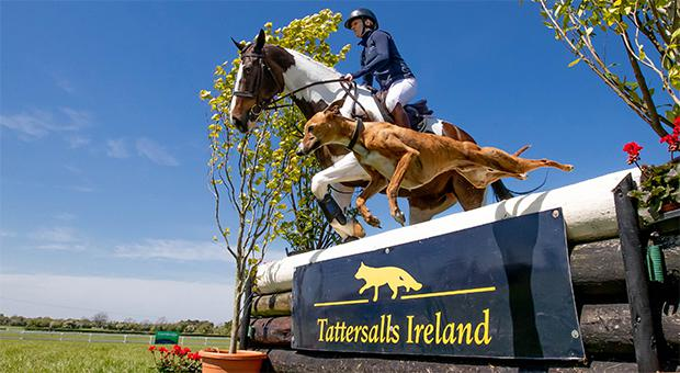 Pictured at the launch of the Tattersalls International Horse Trials & Country Fair was Emily Taylor on her competition horse Frank with whippet Sam, photo by INPHO/Morgan Treacy