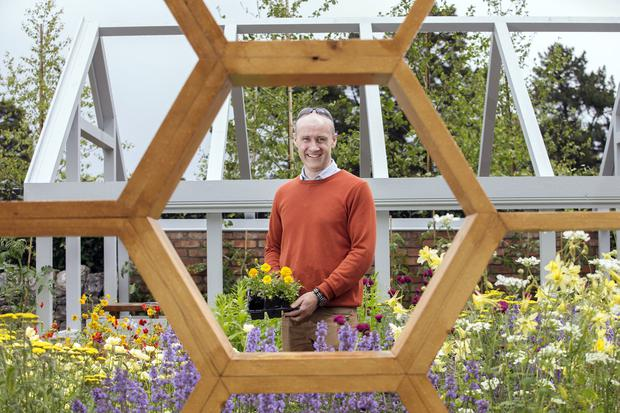Full bloom: Denis Flannery in his 'Bee Positive' show garden at Bloom in the Phoenix Park. Photo: Tony Gavin