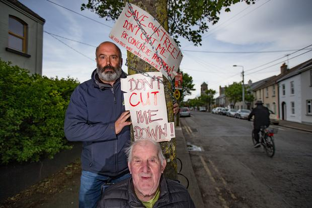 Billy O'Dea and Frank Kavanagh protecting one of the trees on Church Street in Skerries, North County Dublin. Pic: Mark Condren