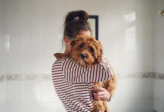 New dog owners will be able to take the two weeks of paid leave to settle their puppy in at home Stock Image