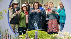 Show time: Visitors photograph some of the flowers at the Crumlin Childrens Hospital Garden by the Kildare Growers Group, at Bloom. Photo: Frank McGrath