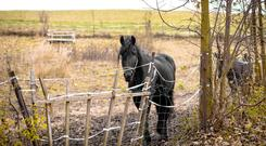 Fraud: Horses that were nearing the end of their lives or sick, and not fit for human consumption, may have entered the international food chain, gardaí believe. Stock photo