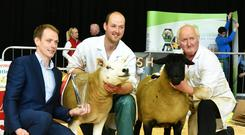 Patrick and Arthur O'Keefe with the Overall Supreme Inter-Breed Champion and Reserve Champion at the NSBA Championships at Kilkenny on Saturday with Connolly Mills representative Michael Butler.