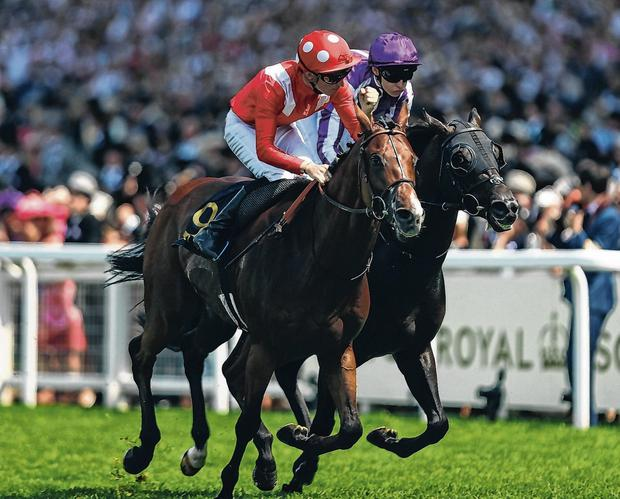 Le Brivido, winning the 2017 Jersey stakes, aims to score again at Royal Ascot, this time for Aidan O'Brien. Photo: Bryn Lennon/Getty Images