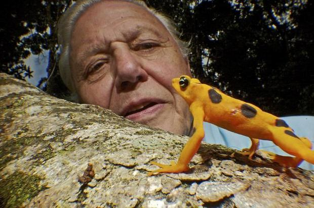 Influence: David Attenborough has convinced many people we must take radical action on climate change