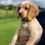 The latest Garda Dog Unit recruit has yet to be named
