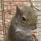 The squirrel after the rescue (Limestone County Sheriff's Office via AP)
