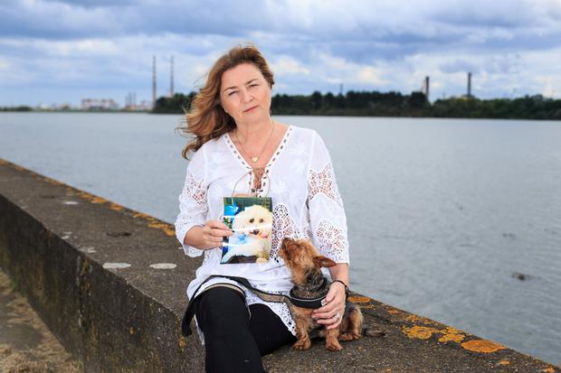 Deirdre Daly holding a photograph of her Bichon Frise dog Teddy, who was mauled by two dogs, also in picture is her dog Amber. Pic:Mark Condren
