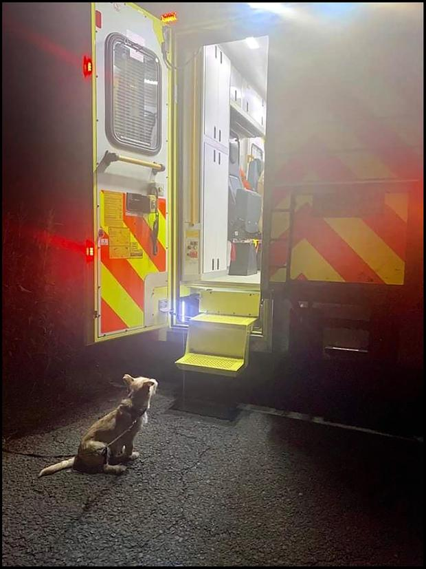 Every dog has his day: Pat Brennan fell down a ditch while taking Jack for a walk, but the pup helped alert emergency services PHOTOS: @GARDAINFO