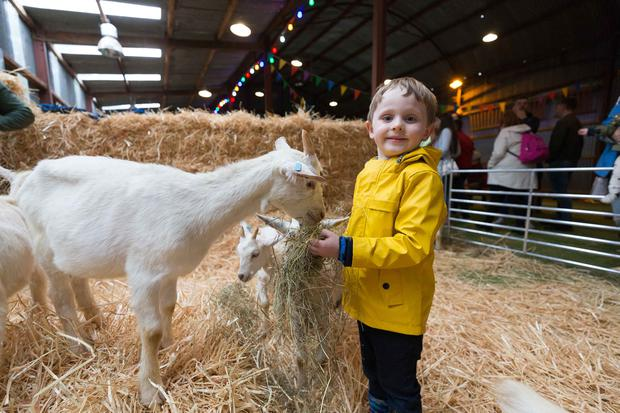Liam O'Flynn at Pa's Pet Farm in Bunratty Castle and Folk Park. Photo: Eamon Ward