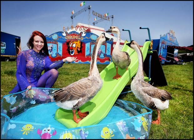 Acrobat Talia Claire from Circus Gerbola watches German geese cooling down in a paddle pool as the show pitches up at Rathnew, Co Wicklow. Photo: Steve Humphreys