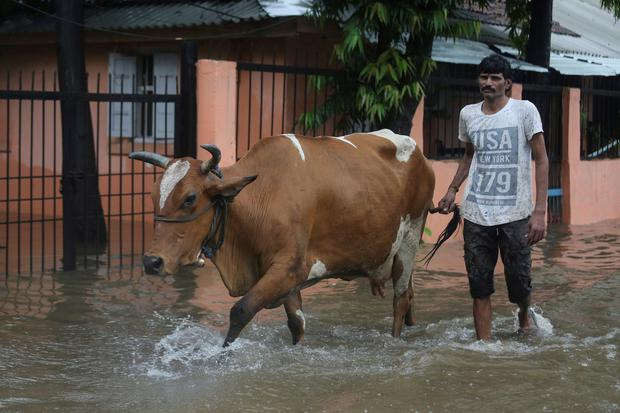 A man walks his cow through a waterlogged street during heavy monsoon rains in Mumbai, India, July 2, 2019. Photo: REUTERS/Francis Mascarenhas