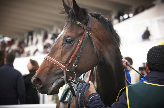In the blood: Research has shown that a specific gene will predict whether a horse is motivated to train or not. Stock Image