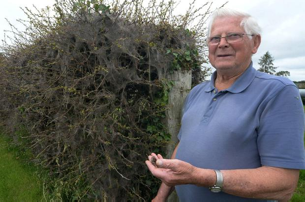 Hungry for answers: John Joe Halpin with the bugs that ate his hedge. Photo: Seamus Farrelly