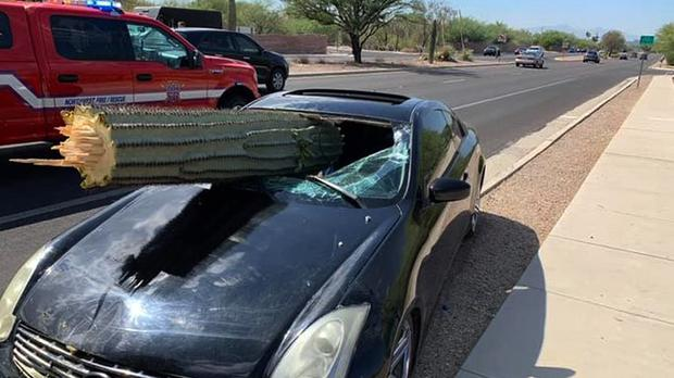 A driver escaped injury when his car's windscreen was pierced by the trunk of a saguaro cactus (Northwest Fire District via AP)