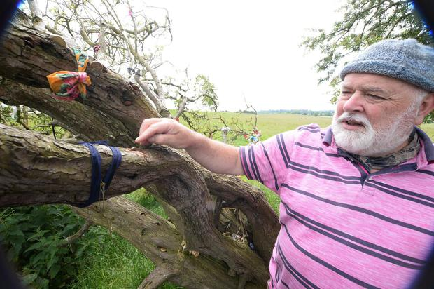 Act now to save others: John Farrelly shows where coins implanted in a tree led to its decline. Photo: Seamus Farrelly