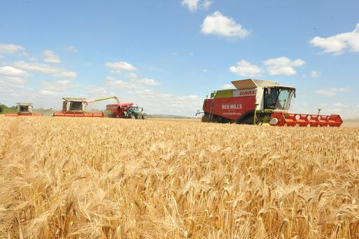 As the temperatures soared last week, these three combines get to work on cutting 100 acres of winter barley in Paulstown Co Kilkenny.James O Reilly and Jimmy Smith keep to two chased bins busy. The crop vatiety was Quantra, it was cut at 19% Moisture and weighed 4 ton per acre. Photo: Roger Jones.