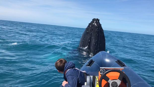 Tomas Deane (14) face to face with a humpback whale off the Kerry coast