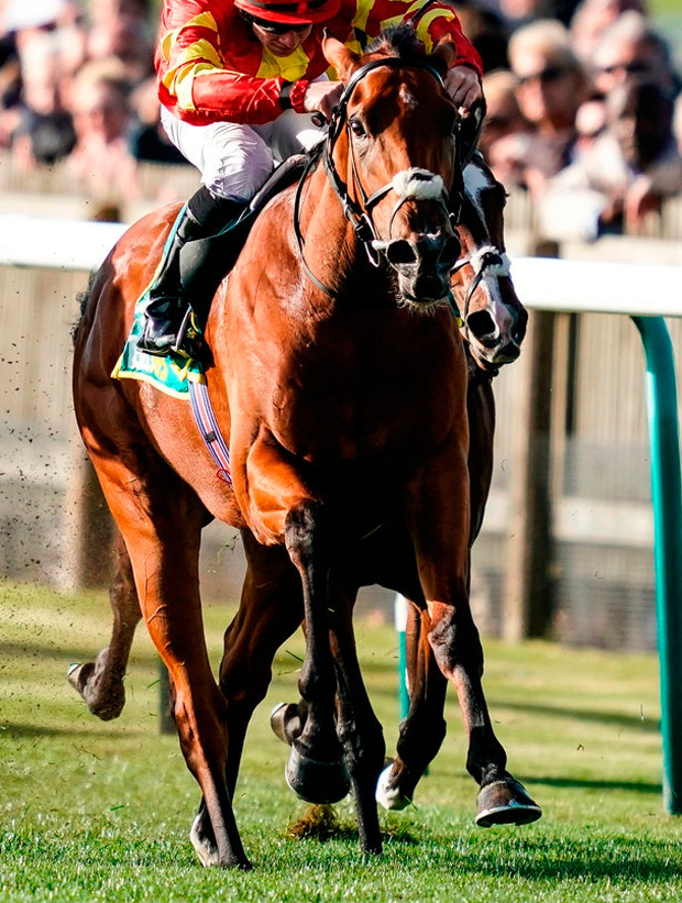 Iridessa in action last year. Photo: Alan Crowhurst/Getty Images