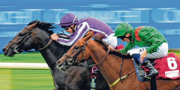 Innisfree (left) under Donnacha O'Brien on the way to victory ahead of Shekhem and Chris Hayes. Photo: Seb Daly/Sportsfile