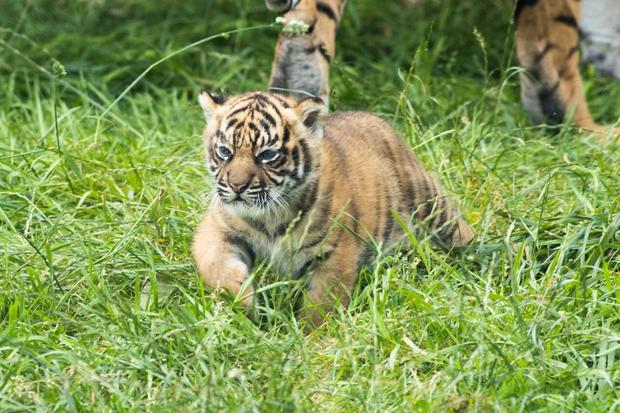 The new cub is settling in at Fota Wildlife Park