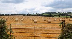 Bumper harvest: Straw yields are on the rebound but prices are back by around €5 per bale for 4x4 bales due to slower demand from beef farmers. Photo: Alf Harvey.