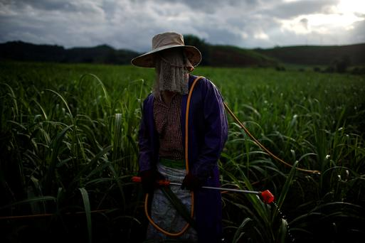 Yan Wenliu, 36, sprays pesticides at a sugar cane field at a village of Menghai county in Xishuangbanna Dai Autonomous Prefecture, Yunnan Province, China, July 12, 2019. Picture taken July 12, 2019. REUTERS/Aly Song u000d