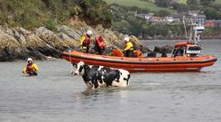 On the move: Ghost eventually reaches dry land after her rescue by an RNLI lifeboat in Cork