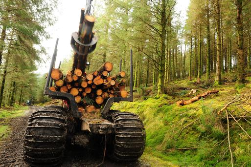 Many forest owners are now planning their harvest five years or more in advance